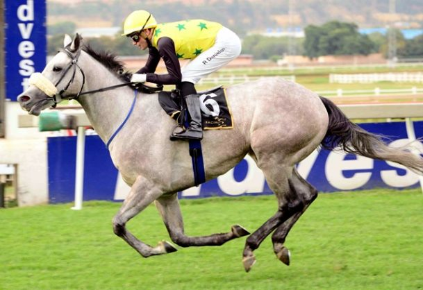 BANKER. Piere Strydom believes Mardi Gras, who runs in Leg 2 of the WSB Grand Series over 1475m at Turffontein today, is a banker in all bets. Picture: JC Photographics