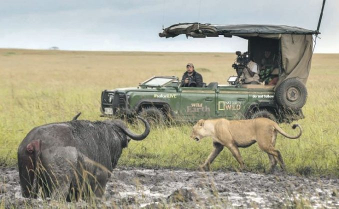 Experience all the thrills of a safari from your couch