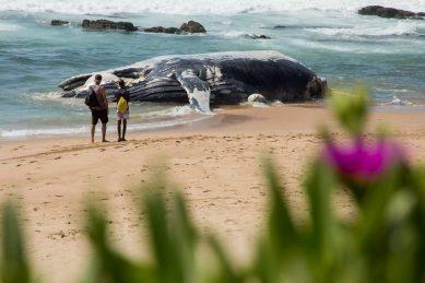Whale carcass washes up ashore near along Jeffreys Bay coastline