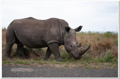 Prince Harry's charity takes 17 SA black rhinos to Malawi