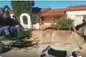 WATCH: Police officers whip 'gentle' donkeys, NSPCA calls for probe