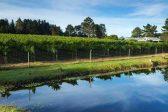 Plett wine farm gains international approval