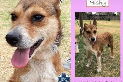 Charming canines up for adoption at the Sandton SPCA