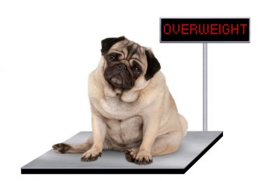 Overweight people more likely to have overweight dogs