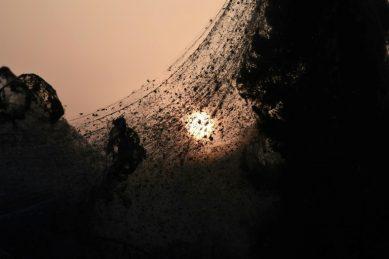 Massive spider web engulfs Greek lake