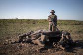 We need more money to curb poaching – SANDF