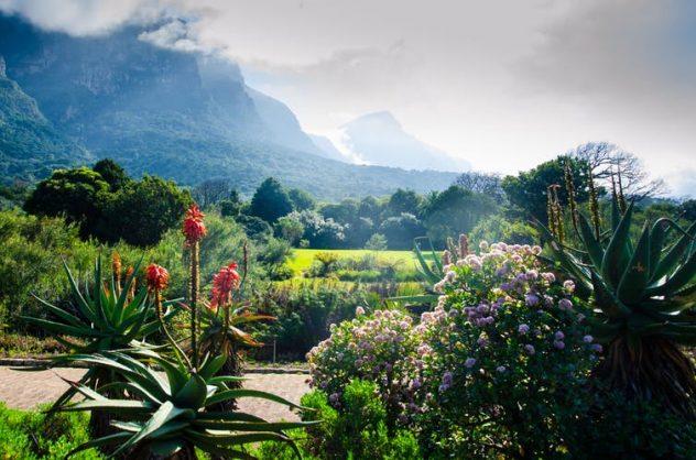 The Kirstenbosch Botanical Garden in Cape Town, South Africa. Picture: Shutterstock