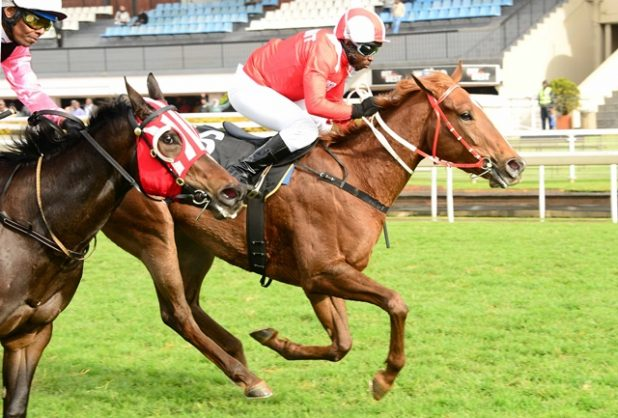 PIERE'S PICK. Piere Strydom has made Fictitious, who runs in Race 9 at the Vaal today, as a banker in all bets. Picture: JC Photograhics