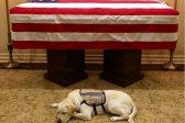Service dog Sully accompanies late president Bush on final farewell