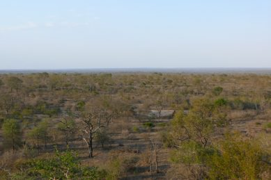 This is the first time a Kruger National Park ranger has gone missing as search continues