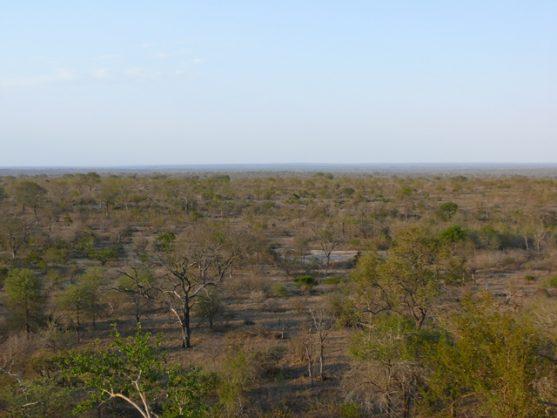 Search still on for missing Kruger Park ranger