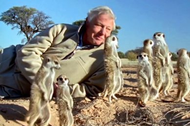 David Attenborough throws his support behind Betty's Bay baboons