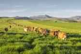 #Budget2019 – R1.8 billion for land reform