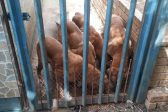 Dogs starve for eight months after owner moves