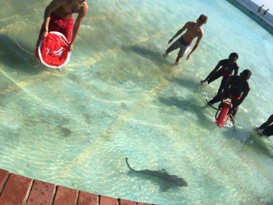 WATCH: KZN lifeguards save three sharks