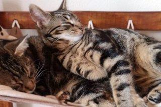 Cape Town cat café: a treat for feisty feral felines