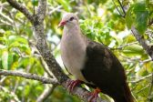 We've saved pink pigeons from extinction – now let's be kinder to their grey cousins