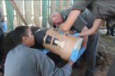 Pretoria company makes custom 'healing boot' for injured rhino