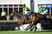 Tilbury Fort, trainer Tarry rule Gauteng Summer Cup in style