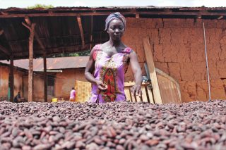 Ghana's cocoa fields reveal the bittersweet story of chocolate