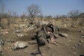 Mokonyane's rhino poaching numbers don't add up