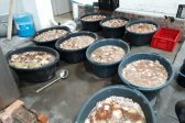 Abalone worth R2.4m seized in Milnerton