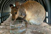 South Australia heatwave smashes record temperatures