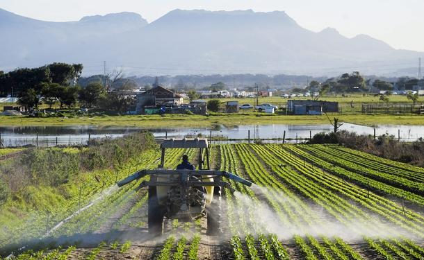 Western Cape govt supported 357 land reform projects – Zille