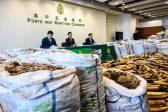 Hong Kong seizes record eight tonnes of pangolin scales