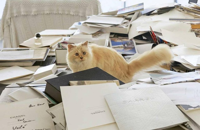 The late Chanel boss Karl Langerfeld's cat, Choupette, on his desk. Picture: Facebook