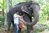 India's 'granny' elephant dies aged 88