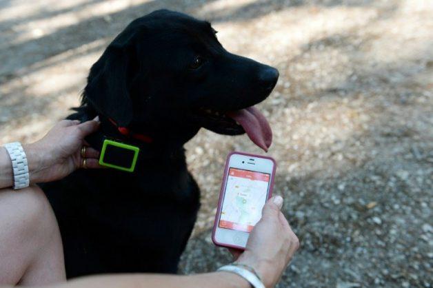 Lockdown Diaries: SPCA staffer in the dog-box