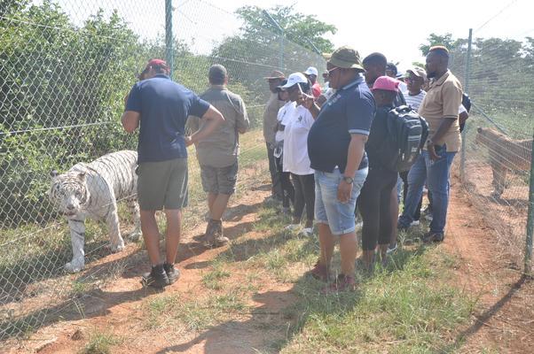 Journalist watch a mixed-breed tiger named Crystal at the Kudusrus predator park in Boshoek near Rustenburg. Photo: ANA/Stringer