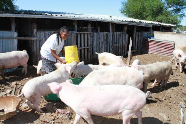 To be successful you have to love what you do, says Faure pig farmer Noncedo Khawuleza-Ndzawuse. Photo: Velani Ludidi/GroundUp