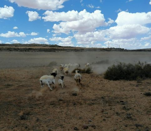 Five years of thirst: Eastern Cape battles brutal drought