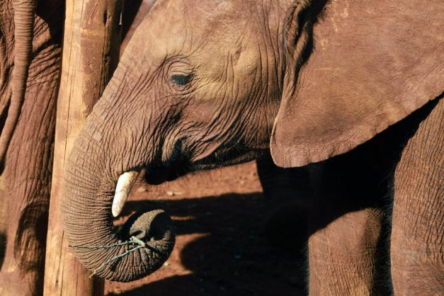 Botswana has an elephant poaching problem, not an overpopulation problem