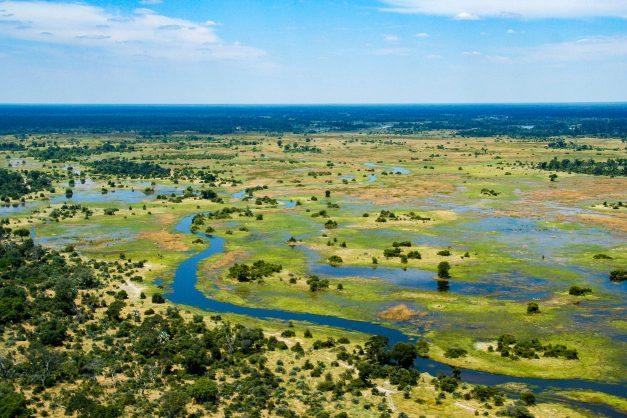 Amphibian adventures in Botswana