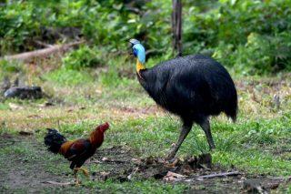 Exotic, dangerous bird kills owner in Florida