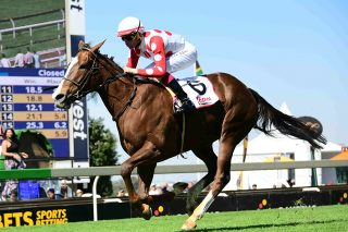 Schippers has the form to win Grade 3 Sycamore Sprint