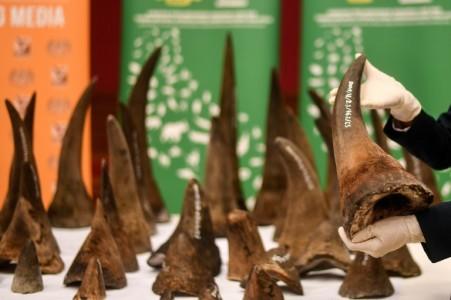 Two men appear for possession of 167 rhino horns