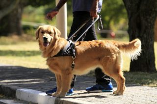 Blind, deaf KZN residents urged to flag incidents after woman's guide dog denied access to building