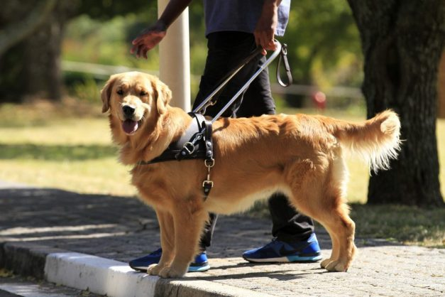 Photo for illustrative purposes only. Image: Guide Dogs Association South Africa
