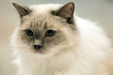 London neighbours spend more than R370K in legal battle over cat