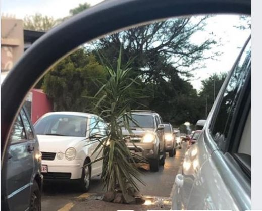 Apparently, an irate resident planted the 2m tree. Photo: Facebook