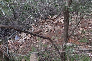 Illegal logging plagues Magaliesberg Mountain