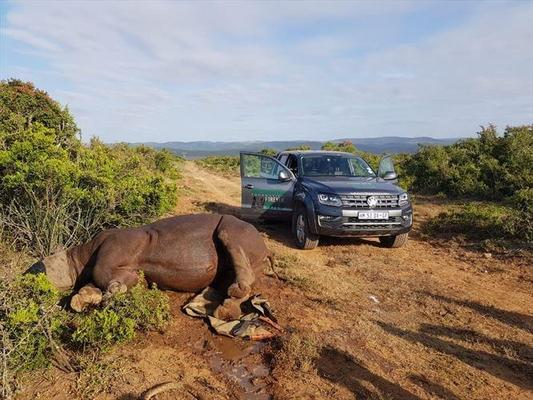 Volkswagen vows continued support for fight against rhino poaching