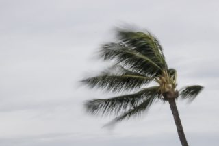 Windy weather warning issued for Durban