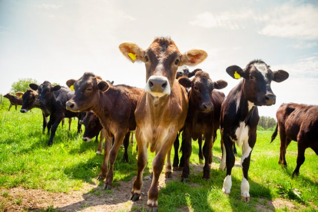 Stock theft in EC soars during lockdown, to over R17m
