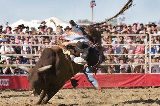 Death-defying bull riders thrill crowds in popular Aussie sport