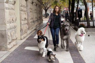 A Dog's Journey review – Sensitive tearjerker